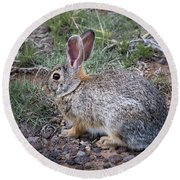 Wild Colorado Cottontail In The Brush Round Beach Towel