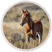 Wild Colt In Sand Wash Basin - Northwest Colorado Round Beach Towel