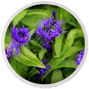 Wild Cornflowers In Iceland Round Beach Towel