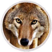 Round Beach Towel featuring the photograph Wild Coyote by Adam Olsen