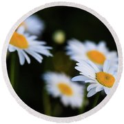 Round Beach Towel featuring the photograph Wild Daisies by Cristina Stefan