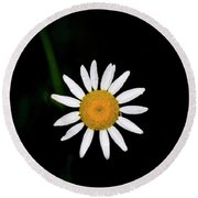 Round Beach Towel featuring the digital art Wild Daisy by Chris Flees