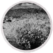 Round Beach Towel featuring the photograph Wild Desert Flowers Blooming In Black And White In The Anza-borrego Desert State Park by Randall Nyhof