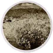 Round Beach Towel featuring the photograph Wild Desert Flowers Blooming In Sepia Tone  by Randall Nyhof