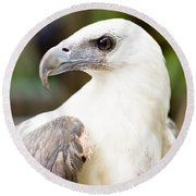 Round Beach Towel featuring the photograph Wild Eagle by Jorgo Photography - Wall Art Gallery