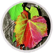 Round Beach Towel featuring the photograph Wild Grape Vine By Kaye Menner by Kaye Menner