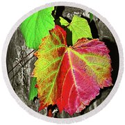 Round Beach Towel featuring the photograph Wild Grape Vine II By Kaye Menner by Kaye Menner