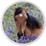 Wild Horse Among Lupines Round Beach Towel