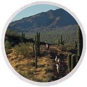 Wild Horses Of The Sonoran Desert Round Beach Towel
