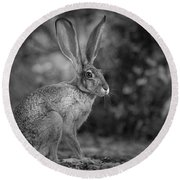 Wild Jack In Black And White Round Beach Towel