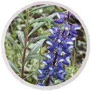 Round Beach Towel featuring the photograph Wild Lupine by Linda Bianic
