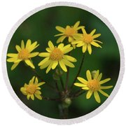 Round Beach Towel featuring the photograph Wild Meadow Daisies by LeeAnn McLaneGoetz McLaneGoetzStudioLLCcom