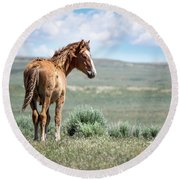 Wild Mustang Colt Of Sand Wash Basin Round Beach Towel