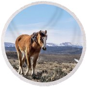 Wild Mustang Filly Of Sand Wash Basin Round Beach Towel