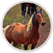 Wild Paint Stallion Round Beach Towel