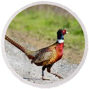 Wild Ring-neck Pheasant On The Move Round Beach Towel