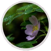 Round Beach Towel featuring the photograph Wild Rose With Shelter by Darcy Michaelchuk