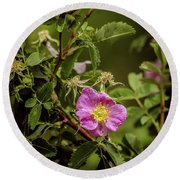Wild Roses Of Summer Round Beach Towel by Yeates Photography