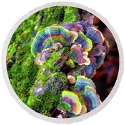 Round Beach Towel featuring the photograph Wild Striped Mushroom Growing On Tree - Paradise Springs - Kettle Moraine State Forest by Jennifer Rondinelli Reilly - Fine Art Photography