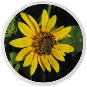 Wild Sunflower Round Beach Towel