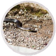 Wild Tiger Snake Round Beach Towel