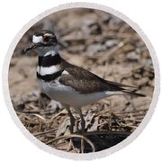 Wildbird Killdeer Mother Round Beach Towel