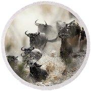 Wildebeest Herd Crossing The Mara River Round Beach Towel