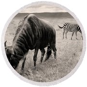 Wildebeest And Zebra Round Beach Towel