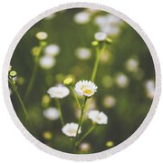 Round Beach Towel featuring the photograph Wildflower Beauty by Shelby Young