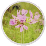 Round Beach Towel featuring the photograph Wildflower IIi by Cassandra Buckley