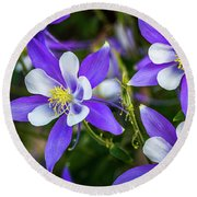 Wildflowers Blue Columbines Round Beach Towel by Teri Virbickis