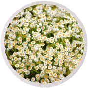 Wildflowers Round Beach Towel by Holly Kempe