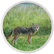 Round Beach Towel featuring the photograph Wiley by Jessica Brawley