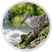 Willet By The Sea Round Beach Towel