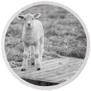 Williamsburg Lamb Round Beach Towel