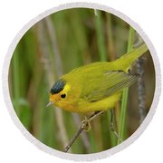 Round Beach Towel featuring the photograph Wilson's Warbler by Doug Herr