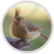 Round Beach Towel featuring the photograph Wind Blown Cardinal  by Terry DeLuco