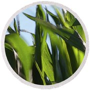 Wind In Corn Leaves 2 -  Round Beach Towel
