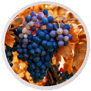 Wine Grapes Of Many Colors Round Beach Towel by Lynn Hopwood