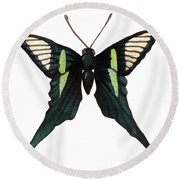 Round Beach Towel featuring the painting Winged Jewels 3, Watercolor Tropical Butterfly With Curled Wing Tips by Audrey Jeanne Roberts