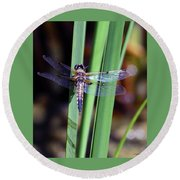 Wings Of The Cattail Round Beach Towel