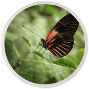 Wings Of The Tropics Butterfly Round Beach Towel