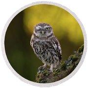 Winking Little Owl Round Beach Towel