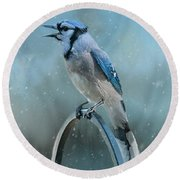 Winter Blue Jay Square Round Beach Towel