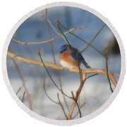 Winter Bluebird Art Round Beach Towel