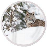 Winter Bobcat Round Beach Towel by Steve McKinzie