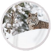 Round Beach Towel featuring the photograph Winter Bobcat by Steve McKinzie