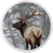 Winter Bull Elk Round Beach Towel