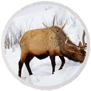 Winter Bull Round Beach Towel by Greg Norrell