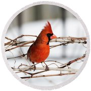 Winter Cardinal 12 Round Beach Towel by David Stasiak